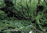 virtual trip 屋久島(トールサイズリニューアル)(通常)(DVD)