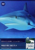 アニマル・プラネット 神秘の海に潜むサメ(通常)(DVD)