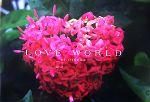 LOVE WORLD 大塚愛作品集(単行本)