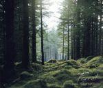 自然が贈るクラシック 森 ピアノBEST(通常)(CDA)